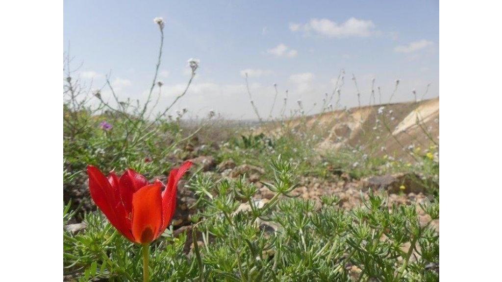 _Dienste-in-Israel-01.jpg